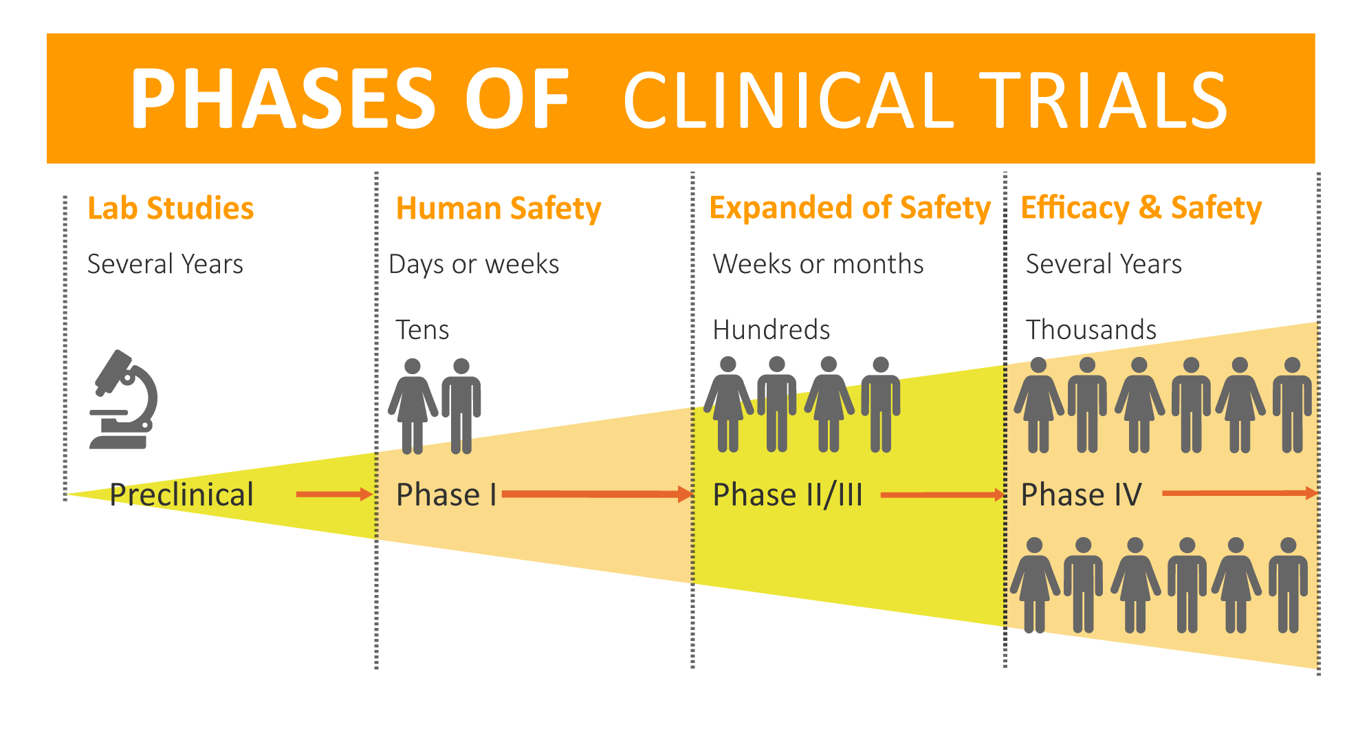 Phases-of-clinical-trials_3
